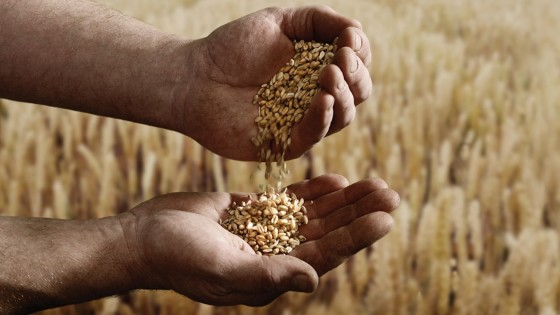Grains in Hands